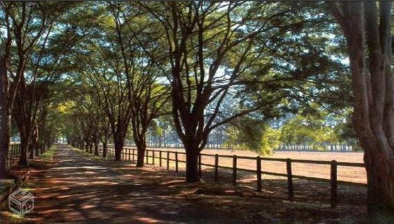 Terreno Padrão Em Osasco - Sp - Te0054_prst