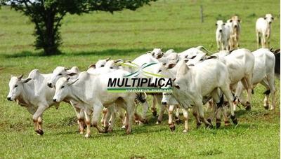 Fazenda Prata Mg Pecuária - 537 Hectares - 123