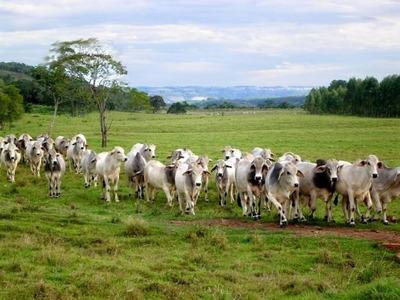 Fazenda Em Barrolândia - To, P/ Pecuária - 95