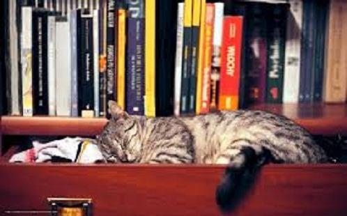 Lote Com 20 Livros Literatura Estrangeira