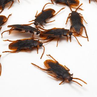 10pcs Divertido Simulado Cucaracha Enfermo Scary Mágico Apoy