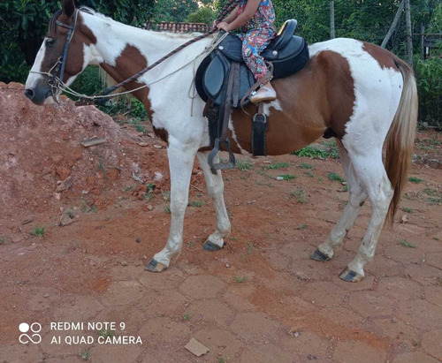 Imagem 1 de 1 de Vendo Cavalo Quarto De Milha