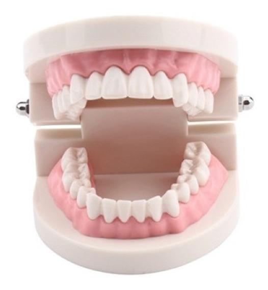 Arcada Dentária Manequim Odontológico + Brinde Livro Cód.246