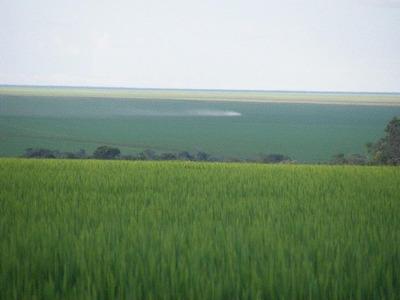 Fazenda P/ Soja Em Balsas - Ma (40.000 Hectares) - 8