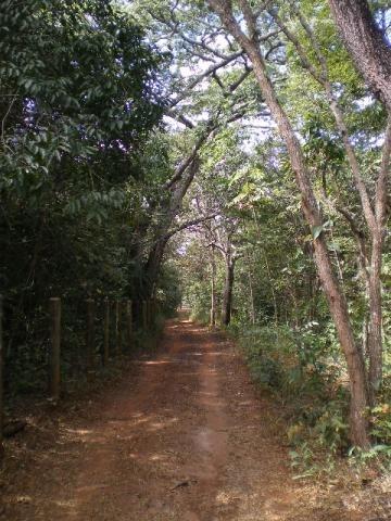 Sítio Em Brasília 116.000 M2 -excelente Para Produção Orgânica- Muita Mata - Água Abundante- 02 Klm Asfalto. - 72