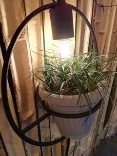 Lámpara Viva Con Planta