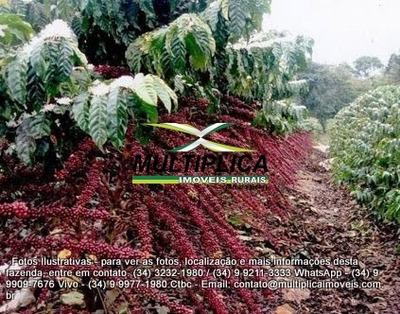 Fazenda Araguari, 77,5 Ha, Café, Lavoura Irrigada, Frutas - 142