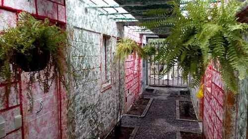 Casa En Renta Hid Zitoon Hapas, La Alianza