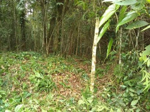 Terreno No Bairro Jardim Coronel, Em Itanhaém - 7129