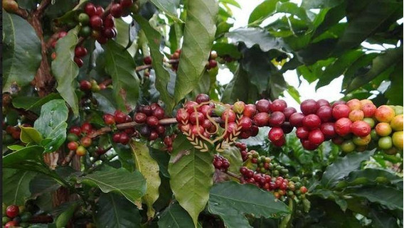 Fazenda À Venda, 30 Alqueires Mineiros, Com 50 Mil Pés De Café Plantados Por R$ 3.500 - Espera Feliz - Espera Feliz/minas Gerais - Fa0001