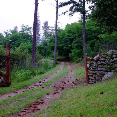 Campo Forestal Zona Turistica 30ha