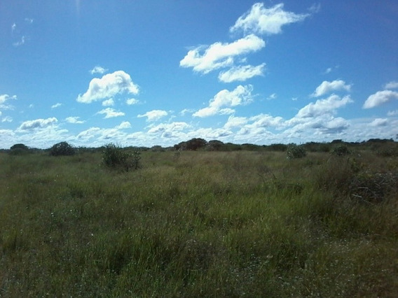 Fazenda Para Arrendar Vacas Em Miranda -ms - 1121