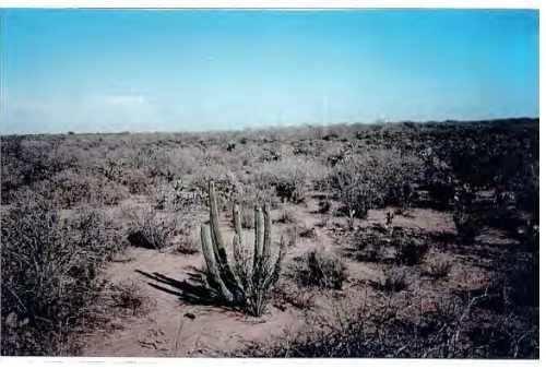 Imagen 1 de 6 de Se Vende Terreno Rustico Cd Obregon