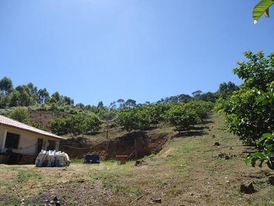 Sitio Comercial Em Domingos Martins - , Tijuco Preto - St00001