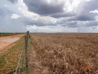 Fazenda Em Brejinho De Nazaré - To, P/ Agricultura - 437