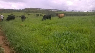 Fazenda Com 598 Hectares Em Varzão De Minas - 1059