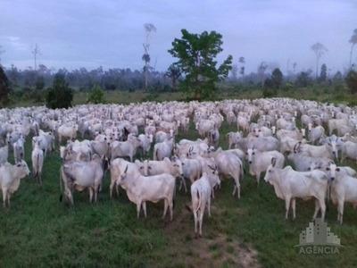 A Maior Fazenda Do Brasil - Fa00054 - 4799707