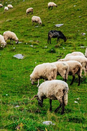 Sc499 Campos En Cordillera Matilde, Prov De Santa Cruz