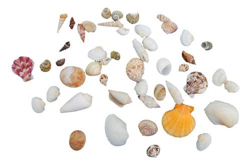 Enfeites Naturais Conchas Do Mar Artesanato Praia Casamentos