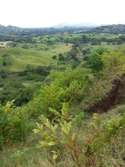 9.2 Hectareas, Cambutal, Terreno Para Inversion $648,000.00