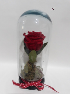 Rosa Eterna. Varios Colores