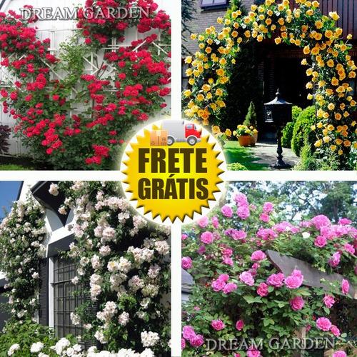 Imagem 1 de 9 de Rosa Trepadeira Sortida -- Sementes Flor Para Mudas