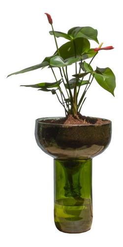 Anturio Little Plant 32 Sin Soporte, Maceta Autorregante