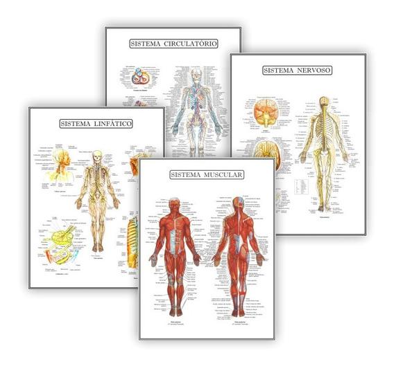 Kit 4 Posteres Anatomia Educação Física Fisio - Plastificado