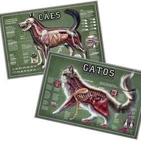 2 Posters 65x100cm Anatomia Cães Gatos - Decorar Veterinária