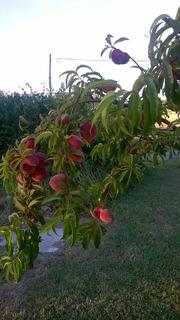 Frutas De Estación, Cosecha Propia, Orgánicas, Saludables