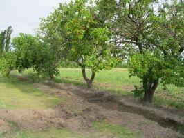 15 Hectareas En Alvear Mendoza
