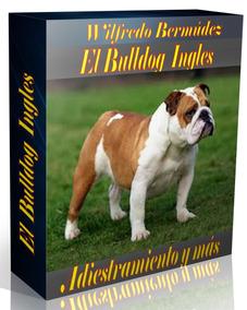 El Bulldog Inglés Adiestramiento Y Más.