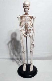 Esqueleto Humano Didáctico Semi Armado 45 Cm De Alto