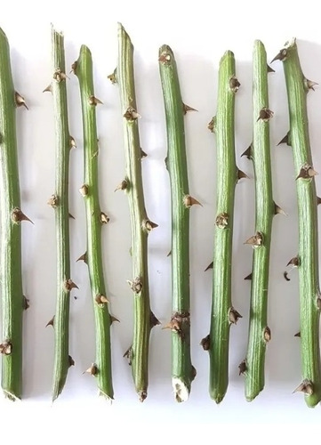 Ora-pro-nobis Planta Organica