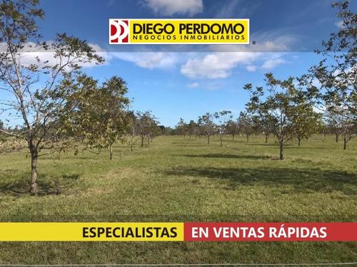 Fraccionamiento De Campo En Venta, Ciudad Del Plata