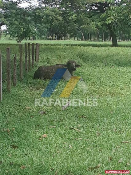 Haciendas - Fincas En Venta, Bruzual Edo Apure