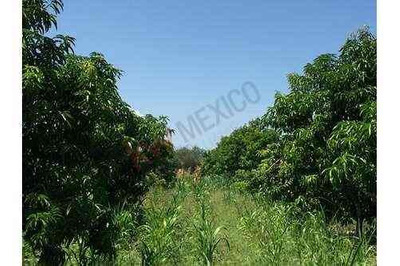 Hermosa Parcela De 3.2 Hectareas Arboles Frutales Y Derecho De Agua