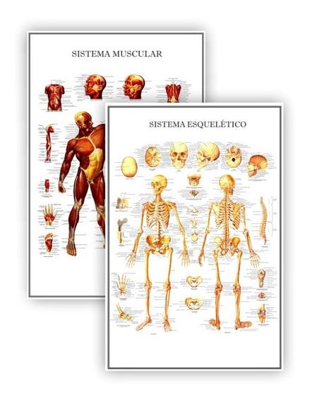 2 Posteres Fisioterapia Sistema Muscular Esquelético 60x90
