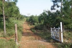 Campo - San Vicente