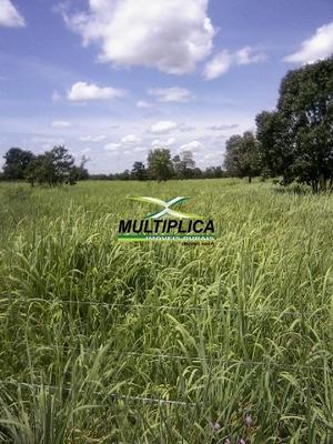 Fazenda Paracatu Mg 200 Ha 41 Alq. Agricultura Pecuária - 220