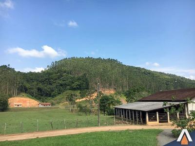 Acrc Imóveis - Área Em Luis Alves, Com 92.000,00 M² + De 6 Mil Pés De Eucaliptos Prontos Para Recorte. - Ar00004 - 32433984