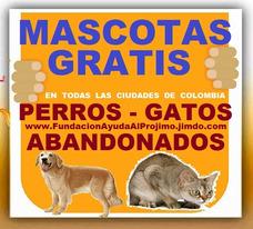 Gratis, Adopcion, Perros, Gatos, Todas Las Ciudades Colombia