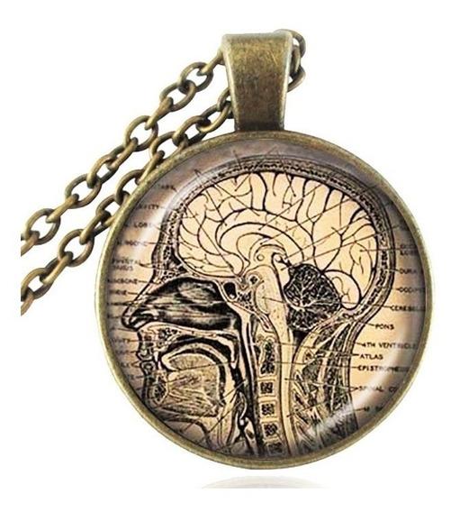 Colar Cabochão Biologia Medicina Neurologia Anatomia Cérebro