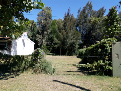 Lote - Terreno - Forestado 679 M2 (mar Del Tuyu)