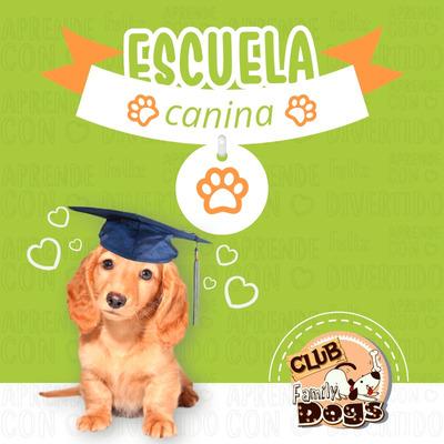 Guardería Canina Medellín Evitamos Depresión 3105223653