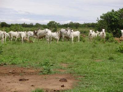 Fazenda Em Silvanópolis - To, Dupla Aptidão - 308