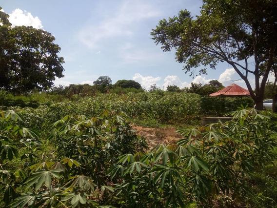 En Venta Productivo Terreno En Caruachi