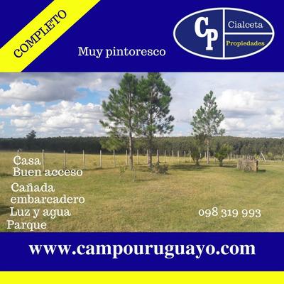 Campo La Vistosa