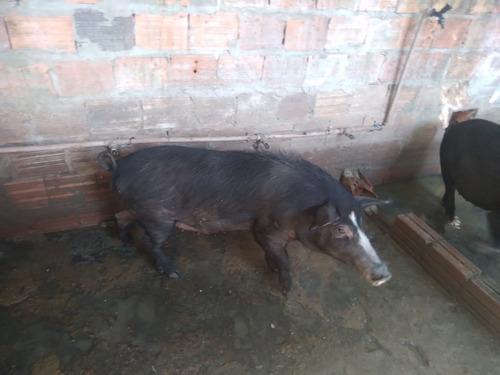 Imagem 1 de 2 de Vendo Porca So Tem 1ano