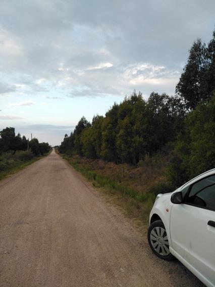 Campo De 13 Hectareas Con Monte De Eucaliptus